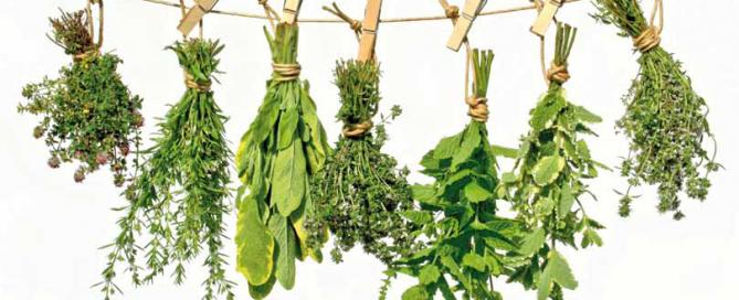 beneficios plantas medicinales